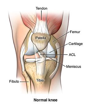Vista dianteira do joelho normal.